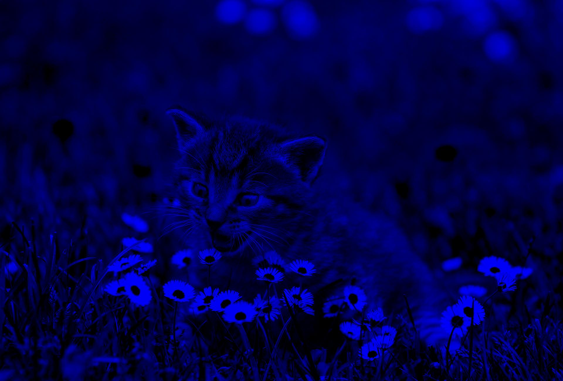 A blue version of the kitty.